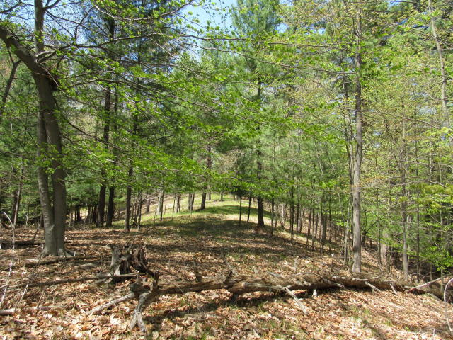 Michigan Recreational Land for Sale