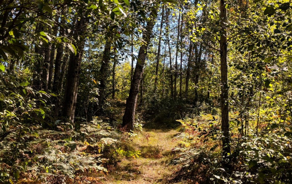Hunting Land for Sale Near Me